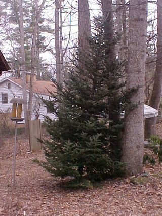 Treestanding